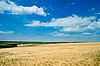 Pole pszenicy zgodnie z nieba | Stock Foto