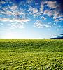 Rolnych zielonym polu na zachód słońca | Stock Foto