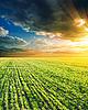 Green field rolnych i słońca | Stock Foto