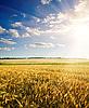 Pole pszenicy zgodnie z nieba z słońca | Stock Foto
