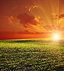Rolnych pole zielone i czerwone Słońca | Stock Foto