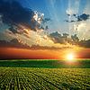 ID 3091393 | Landwirtschaftliches grünes Feld und Sonnenuntergang | Foto mit hoher Auflösung | CLIPARTO