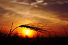 Kłosy dojrzałej pszenicy o zachodzie słońca | Stock Foto