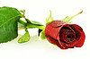 ID 3091563 | Świeża czerwona róża z kroplami | Foto stockowe wysokiej rozdzielczości | KLIPARTO