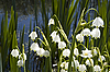 ID 3098728 | Maiglöckchen | Foto mit hoher Auflösung | CLIPARTO