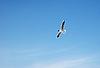 ID 3120151 | Möwe im Flug | Foto mit hoher Auflösung | CLIPARTO