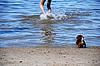 ID 3120526 | Gra z małym szczeniakiem w nadmorskiej | Foto stockowe wysokiej rozdzielczości | KLIPARTO