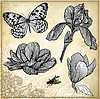 Set von Hand-Zeichnung Blume und Schmetterling