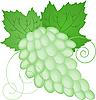 grüne Traube