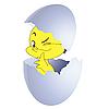 Gelbes Küken im Ei