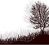 Baum im Gras
