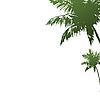 Zwei Palmen von grüner Farbe