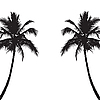 Zwei schwarze Silhouetten der Palmen.