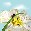 Marienkäfer an der Blume