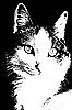 고양이 스케치 | Stock Illustration