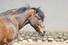 Z piękna głowa konia | Stock Foto