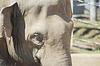 Von Kopf-und Augenbewegungen eines asiatischen Elefanten | Stock Foto