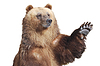 Niedźwiedź wita z łapy | Stock Foto