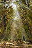 Jesienią lasu i dziecko | Stock Foto