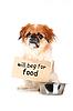 小狗 | 免版税照片