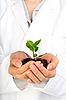 ID 3107376 | Маленькое растение в руках | Фото большого размера | CLIPARTO