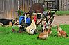 ID 3127919 | Landschaft im ländlichen Raum mit Nutztieren | Foto mit hoher Auflösung | CLIPARTO