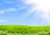Grünes Gras und Himmel | Stock Illustration