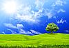 Grünes Gras und Himmel | Stock Foto