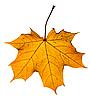 ID 3113948 | 단풍 나무 잎 | 높은 해상도 사진 | CLIPARTO
