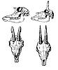 ID 3113208 | Czaszki dzikich zwierząt | Stockowa ilustracja wysokiej rozdzielczości | KLIPARTO
