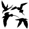 Silhouetten von Seevögeln