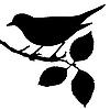 Silhouette der Vogel auf Zweig