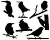 Silhouetten von kleinen Vögeln auf dem Zweig