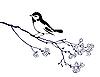 Silhouette eines Vogels auf dem Zweig