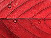 Красный лист с каплями | Фото