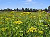 ID 3263626 | Żółtym polu jesienią | Foto stockowe wysokiej rozdzielczości | KLIPARTO