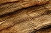 ID 3240617 | Nahaufnahme von einem Tier Fell Textur | Foto mit hoher Auflösung | CLIPARTO