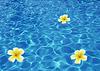 열 대 꽃 플루 메리아 알바와 바다에서 조개 | Stock Foto