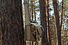 Shoulder bag hanging on pine tree | Stock Foto