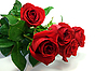 Rote Rosen | Stock Foto