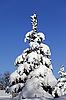 Snowy fir on background of blue sky | 免版税照片