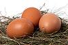 ID 3196774 | Hühnereier im Nest | Foto mit hoher Auflösung | CLIPARTO
