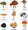 Satz von essbaren Pilzen