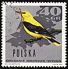ID 3180968 | Oriole auf Briefmarke | Illustration mit hoher Auflösung | CLIPARTO