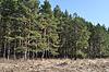 ID 3220298 | Krawędź las iglasty w czasie wiosennych | Foto stockowe wysokiej rozdzielczości | KLIPARTO