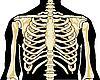 Скелет человека. Грудь | Векторный клипарт