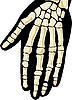 人类骨骼。手 | 向量插图