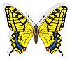 Бабочка-парусник | Векторный клипарт