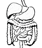 消化系统 | 向量插图