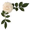 Sprig von Tee-Rose | Stock Photo